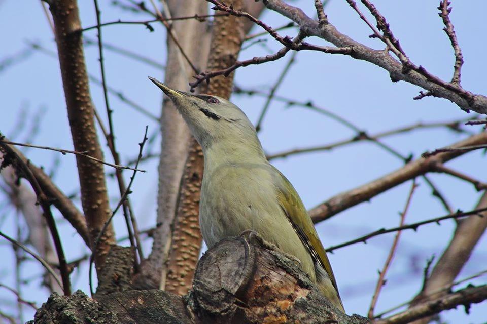 них много птицы обитающие в днепропетровской области фото янтык сверху